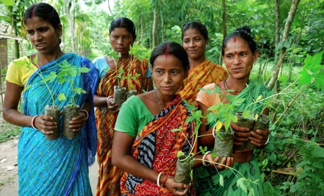 piplantri-eco-feminism-project