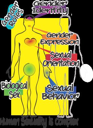 more-than-sex-ed