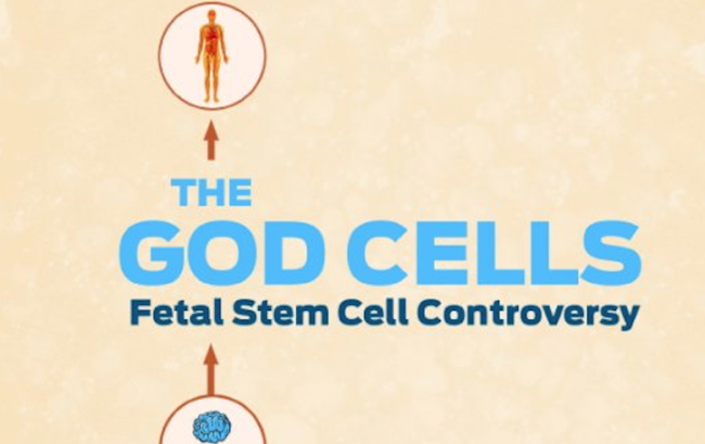 What makes stem cell research such a controversial issue?